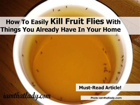 How To Easily Kill Fruit Flies With Things You Already