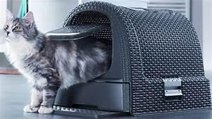Litiere Chat Sans Odeur : quelle liti re pour rendre votre chat heureux ~ Melissatoandfro.com Idées de Décoration