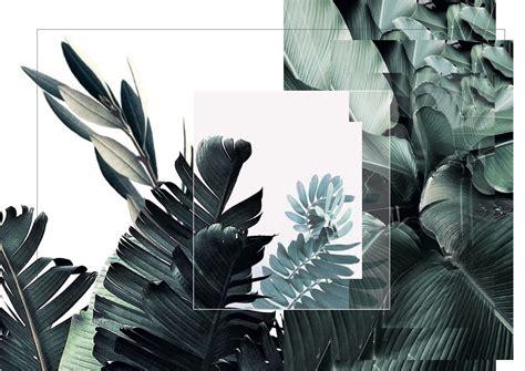 leaves blue green white aesthetic green