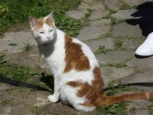 Weißer Wurm Katze : ohren von weisser katze vor sonnenbrand sch tzen katzen forum ~ Markanthonyermac.com Haus und Dekorationen
