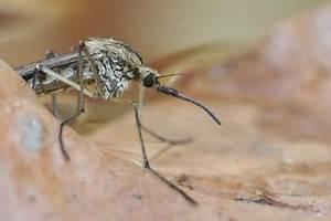 Was Hilft Gegen Mücken In Der Wohnung : ungeziefer in der wohnung die besten tipps gegen ameisen m use co immowelt ag ~ Markanthonyermac.com Haus und Dekorationen