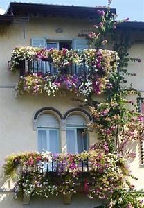 Plantes Grimpantes Mur : des plantes grimpantes pour balcon et terrasse on est ~ Melissatoandfro.com Idées de Décoration