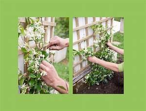 Treillage Plante Grimpante : planter une plante grimpante dans un massif de fleurs galerie photos d 39 article 9 11 ~ Dode.kayakingforconservation.com Idées de Décoration