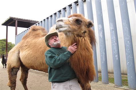 camel baby princess zoo rare bowl super before csmonitor sports left tv bactrian music animal picking pigskin dies nj