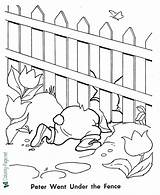 Rabbit Peter Coloring Fence Under Near Crawls Library sketch template