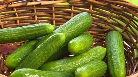 cuisiner le concombre choisir les meilleurs concombres et les cuisiner cet été
