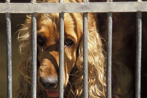 dont fool  animal neglect  animal abuse dogtime