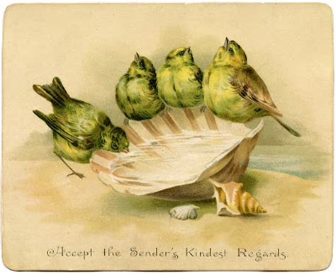 graphic image birds  seashell birdbath