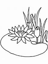 Lily Coloring Water Pages Flower Pad Flowers Drawing Lilies Frog Line Cartoon Clipart Printable Pads Colouring Adult Drawings Draw Pond sketch template