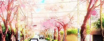 Kimi Cherry Blossom Uso Shigatsu Wa Anime