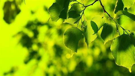nature, Leaves, Bokeh, Green Wallpapers HD / Desktop and ...