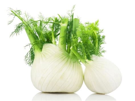 what part of fennel do you use 11 amazing benefits of fennel tea organic facts