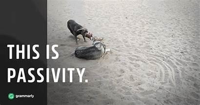 Passivity Passiveness Past Simple Meaning Grammarly Tense