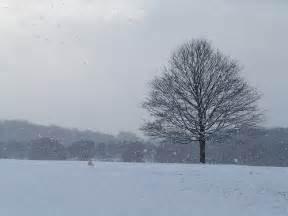 Flickr Snow Falling