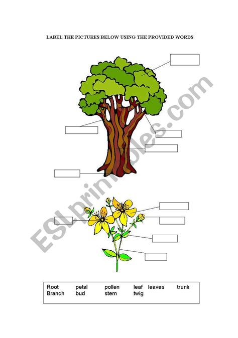 Parts Of A Tree  Esl Worksheet By Uthe