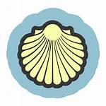 Seashell Clipart Shell Vector Seashells Icon Clip