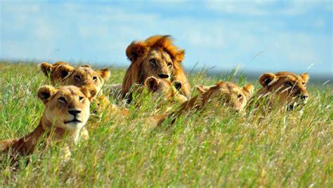 tanzania luxury tented safari zicasso
