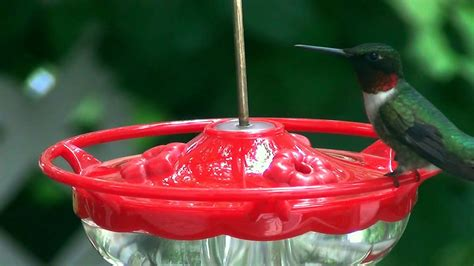 mini high perch hummingbird feeder video wild birds