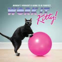 exercise cat work it kitty a feline promo for temptations cat