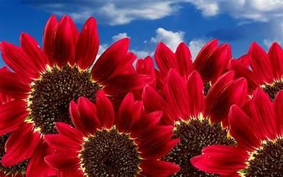 Flowers Fall Wallpapertag