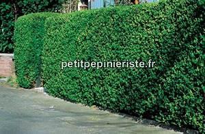 Arbuste Pour Haie Pas Cher : p pini re jardinerie haie rapide simple et pas cher ~ Nature-et-papiers.com Idées de Décoration