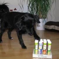 Hunde Intelligenzspielzeug Selber Machen : hunde intelligenzspiele aus m ll basteln ~ A.2002-acura-tl-radio.info Haus und Dekorationen