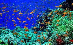 Beautiful Underwater Photography Wallpaper | Wallpapers ...