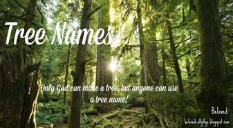 beloved baby names tree names