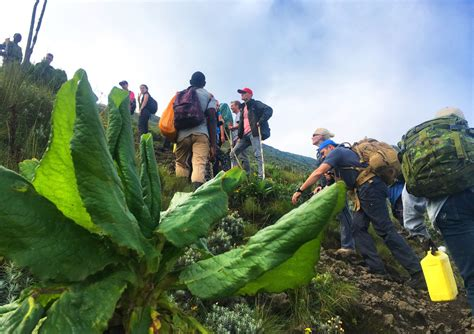 Climbing Mount Nyiragongo A Hike To The World's Largest