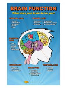 Functions of the Brain Concussions