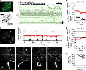 Quantification Of Brain Motion During Motor Output A