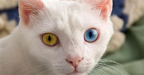 Labākā sazvērestības teorija: Vai kaķi ir citplanētiešu ...
