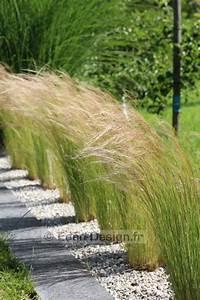 Plante De Bordure : les 25 meilleures id es de la cat gorie bordure de jardin sur pinterest bordure pour parterre ~ Preciouscoupons.com Idées de Décoration