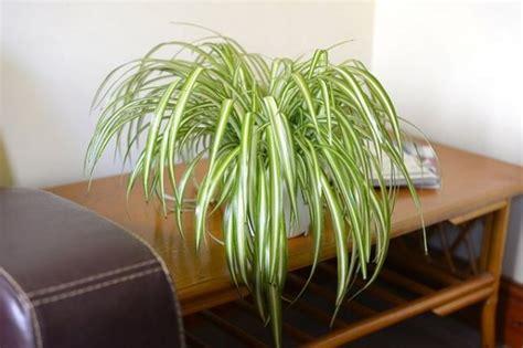 plantas de interior  absorben la humedad del aire