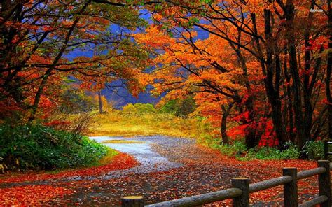Autumn Wallpaper by Trail In Autumn Forest Wallpaper Nature Wallpapers 14492
