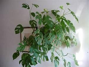 Plante Pour Appartement : plante retombante plante verte retombante plante verte d ~ Zukunftsfamilie.com Idées de Décoration