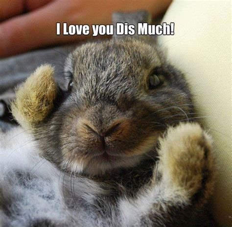 Cute Love Meme - funny pictures i love you dis much