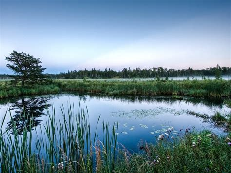 pond images mirror glass pond wallpapers hd wallpapers id 6635