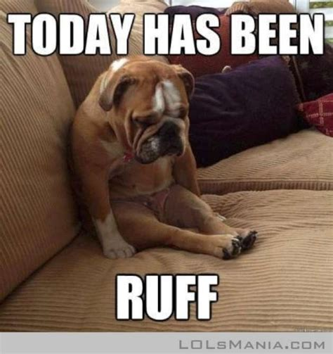 Pet Meme - if your pets could talk adorable animal memes to make you smile momtastic