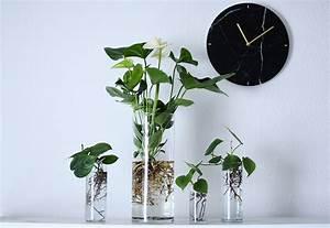 Anthurie Im Wasser : zimmerpflanze 2 0 stadtwerke d sseldorf ~ Yasmunasinghe.com Haus und Dekorationen