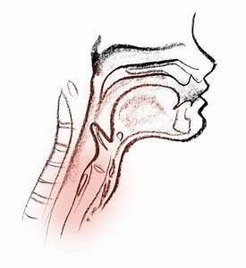 Larynx  A K A  Voice Box  Vibrates When You Speak