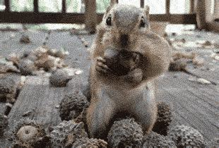 acorn gifs find share  giphy