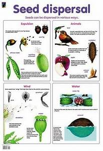 Pin On Seeds And What To Do With Them