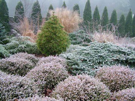 conifers   winter garden
