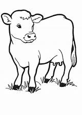 Cows Coloring sketch template