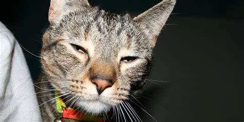experimented  meowijuana  marijuana  cats