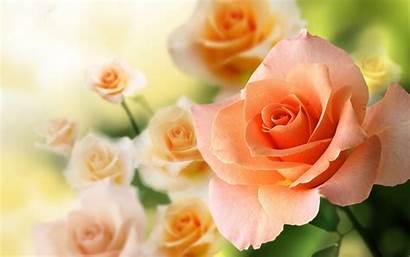 Peach Flowers Desktop Wallpapers 4k