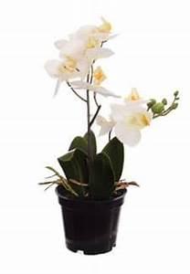 Künstliche Orchideen Im Topf : kunstorchideen k nstliche orchideen im topf ~ Watch28wear.com Haus und Dekorationen