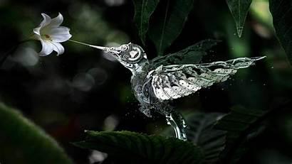 Pretty Desktop Mechanical Hummingbird Bird Wallpapers 1440p