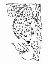 Hedgehog Coloring Pages Printable Animals Getcolorings Mycoloring sketch template
